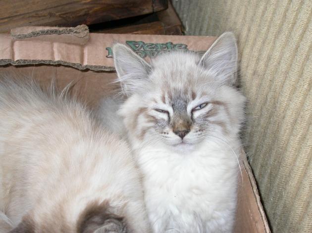 Katze-10